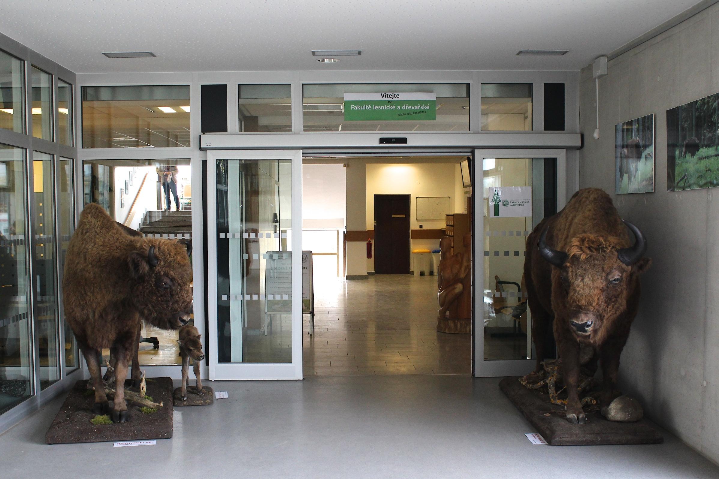 Vchod fakulty od ledna 2015 střeží zubří rodinka.